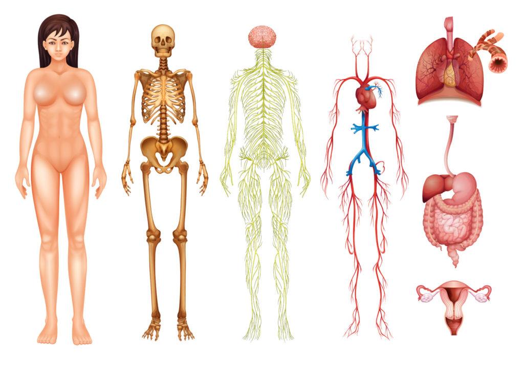 Самый системный врач – эндокринолог